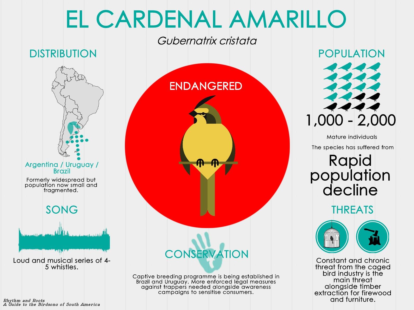 El Cardenal Amarillo