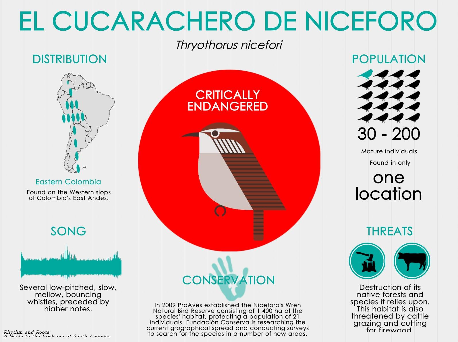 Cucarachero de Niceforo